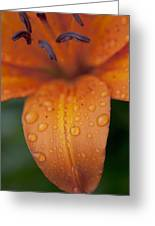 Close-up Of Orange Lily Flower After Greeting Card
