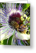 Close Up Of Passion Flower With Honey Bee  Greeting Card
