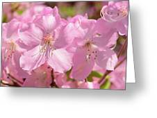 Close Up Of Pink Shell Azalea Flowers Greeting Card