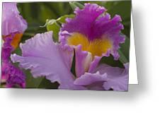 Close-up Of Purple Orchid Flowers Greeting Card