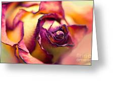 Close Up Of The Dry Rose Greeting Card