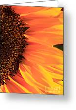 Close Up Of The Florets And Petals Of A Sunflower Greeting Card