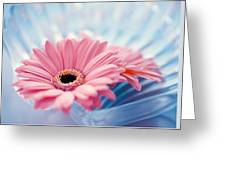 Close Up Of Two Pink Gerbera Daisies Greeting Card