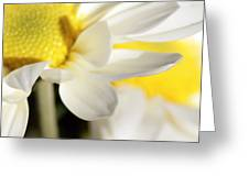 Close Up Of White Daisy Greeting Card