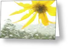Close-up Of Yellow Wildflower In Grand Greeting Card