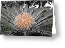 Close Up Palm Greeting Card