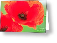 Close Up Poppies Greeting Card