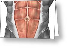 Close-up View Of Male Abdominal Muscles Greeting Card