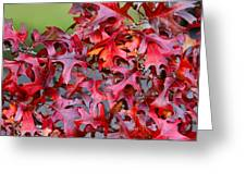 Close View Red Oak Leaves Greeting Card