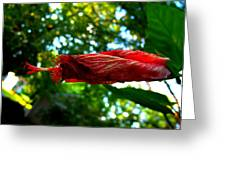 Closed Hibiscus Greeting Card by Mark Malitz
