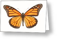 Closeup Of A Butterfly Greeting Card