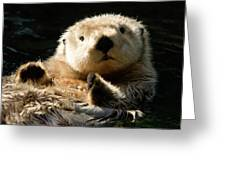 Closeup Of A Captive Sea Otter Making Greeting Card