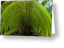 Closeup Of A Palm Tree Leaf Greeting Card