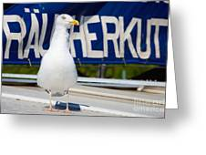 Closeup Of A Seagull On A Fisher Boat  Greeting Card
