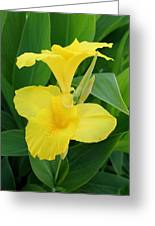 Closeup Of A Tropical Yellow Canna Lily Greeting Card