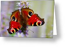 Closeup Of An European Peacock  Greeting Card