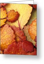 Closeup Of Dwarf Birch Leaves Autumn Ar Greeting Card