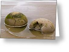 Closeup Of Famous Spherical Moeraki Boulders In Nz Greeting Card