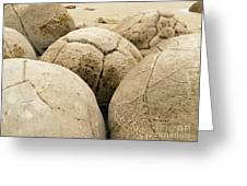 Closeup Of Famous Spherical Moeraki Boulders Nz Greeting Card