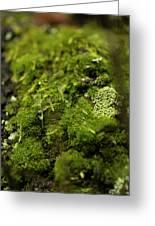 Closeup Of Moss And Lichen. Rhoen Greeting Card