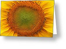 Closeup Of Sunflower Greeting Card