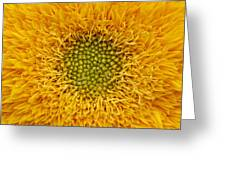 Closeup Of Sunflower Greeting Card