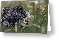 Clothed Toad Greeting Card