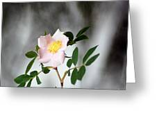 Cloud Mountain Cherokee Rose Greeting Card