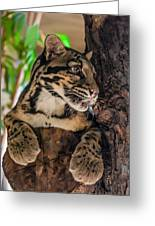 Clouded Leopard 2 Greeting Card