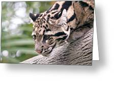 Clouded Leopard Cub Greeting Card
