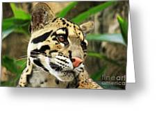 Clouded Leopard Face Greeting Card