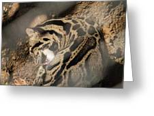 Clouded Leopard - National Zoo - 01134 Greeting Card