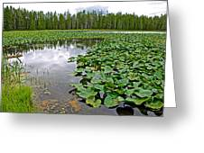 Clouds Among The Lily Pads In Swan Lake In Grand Teton National Park-wyoming  Greeting Card