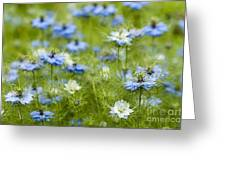 Clouds Of Blue Greeting Card
