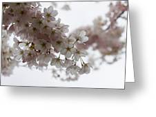 Clouds Of Soft Pink Blossoms - A Tribute To Spring Greeting Card