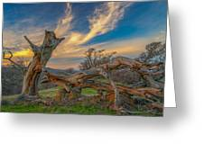 Clouds Over Broken Tree At Sunset Greeting Card