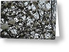 Cloudy Day For Young Magnolias Greeting Card