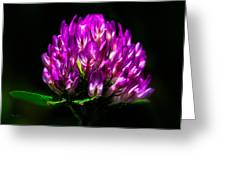 Clover Flower Greeting Card by Bob Orsillo