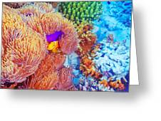Clown Fish Swimming Near Colorful Corals Greeting Card