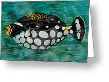 Clown Triggerfish Greeting Card