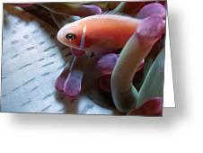 Clownfish 17 Greeting Card