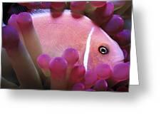Clownfish 2 Greeting Card