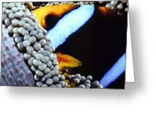 Clownfish 7 Greeting Card