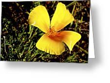 Club Flower Greeting Card by Tim Rice