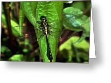 Club Tailed Dragonfly Greeting Card