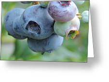 Clump Of Blueberries 2 Greeting Card