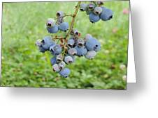 Clump Of Blueberries 3 Greeting Card
