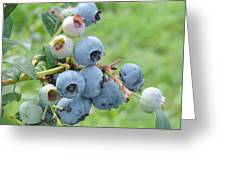 Clump Of Blueberries Greeting Card