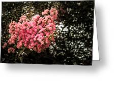 Clump Of Flowers Greeting Card