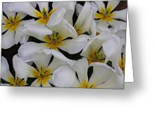 Cluster Of White Greeting Card